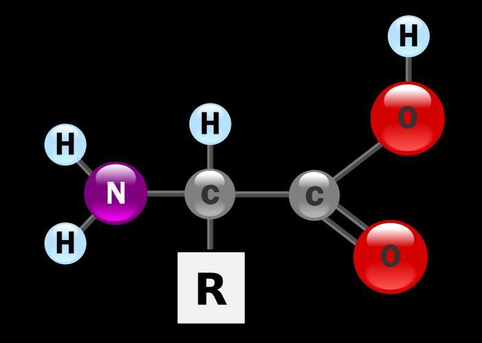 Amino acid basic structure