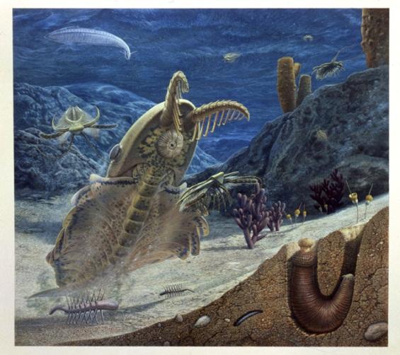 Burgess Shale Sea Floor