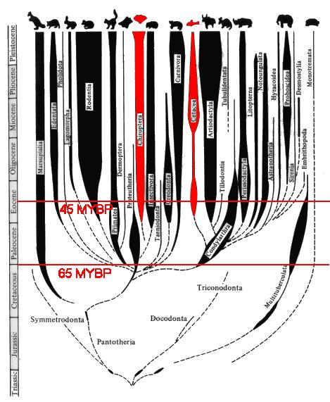 Diagram of Mammalian Adaptive Radiation
