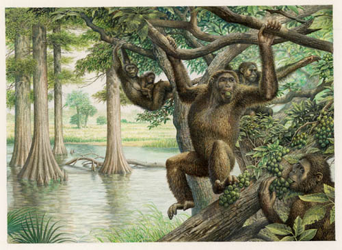 Dryopithecus swinging through the trees